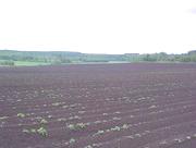 Välkomna till Källeberg och Hasslekärrs lantbruk